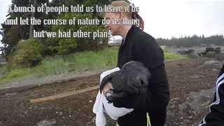 Locals Save Seal Pup, Bring it Back to Water - Video