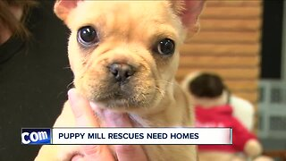 Dozens of dogs need homes after Buffalo group helps with puppy mill rescue