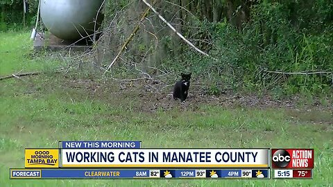 'Working Cat' program puts feral felines to work catching mice