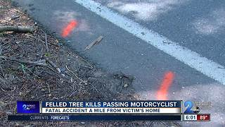 Felled tree kills passing motorcyclist - Video