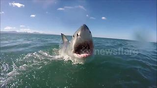 Watch a great white shark lunge right at a GoPro camera as it launches out of the water - Video
