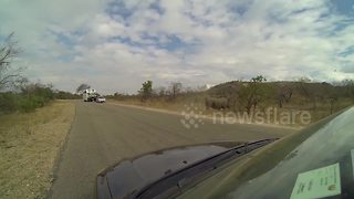Angry rhino charges car - Video