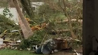 Trees Downed After Hurricane Maria Slams Through St Croix - Video