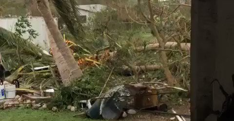 Trees Downed After Hurricane Maria Slams Through St Croix