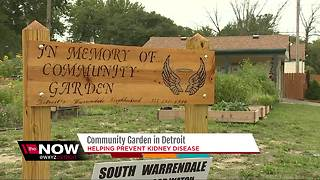 Community garden in Detroit helping prevent kidney disease - Video