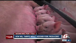 Indiana hog farmers concerned about how China's imposed tariffs will impact their production - Video