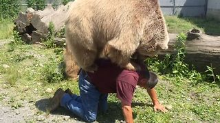 Incredible moment 400lb bear balances on man's back - Video
