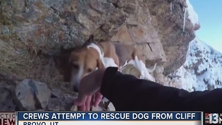 Crews attempt to rescue dog from cliff - Video
