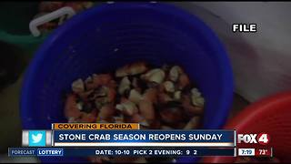 Stone crab season kicks off