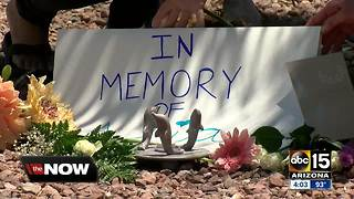Groups hold vigil for dolphin who died at Dolphinaris - Video
