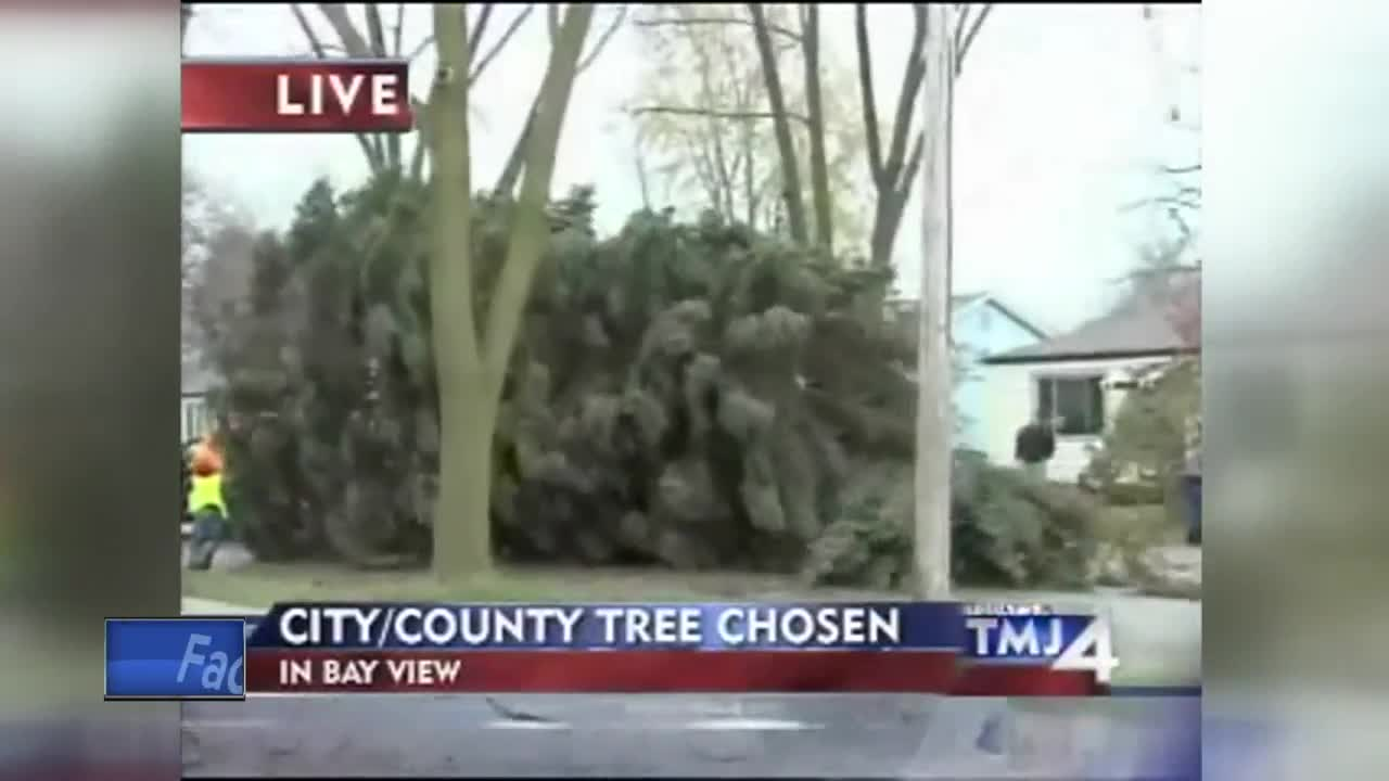 Milwaukee successfully harvests annual Christmas tree
