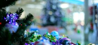 Christmas tree sales surging due to COVID-19