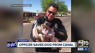 Phoenix police officer saves dog from canal - Video
