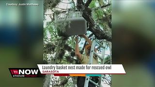 Laundry basket nest made for rescued owl - Video