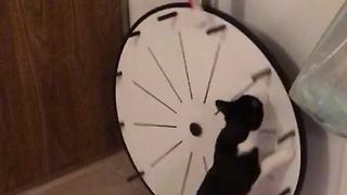 Kitty practices for 'The Price Is Right' by spinning wheel
