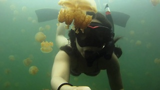 Swimming With These Jellyfish Is Not Bad At All - Video