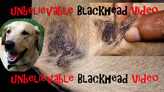 Blackheads of my Dog  - Video