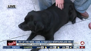 Pet of the Week: Hank