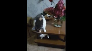 Funny cat under the table