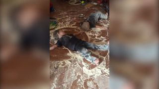 Toddlers Make Flour Snow Angels