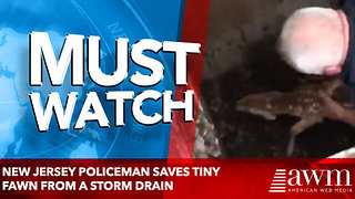 New Jersey policeman saves tiny fawn from a storm drain - Video