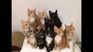 Adorable Synchronized Kittens Can't Take Their Eyes Off the Prize - Video