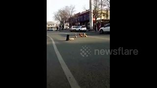 These Stray Dogs Gathered To Watch Over Lost Friend - Video