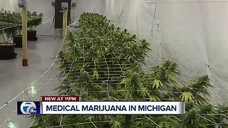 We're taking you inside a medical marijuana grow house in metro Detroit - Video