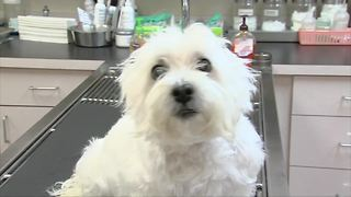 Puppies being blamed for sickening people across the country - Video