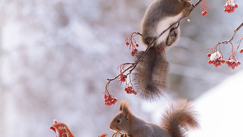 2017 Christmas photos with squirrels