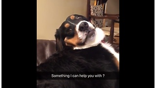 Dog gives ridiculous face for the camera - Video