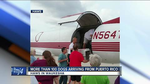 Displaced dogs from Puerto Rico are coming to Wisconsin