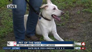 Pet of the week: Prince
