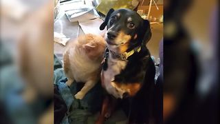 Dog And Cat Are Best Friends