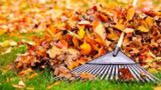 Turn Those Leaves into Compost - Video