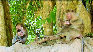 Adult Monkey Rubber Band Love To Care Baby Monkey - Video