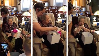 Veteran Great-Grandma Gets A Puppy Surprise For Her 96th Birthday