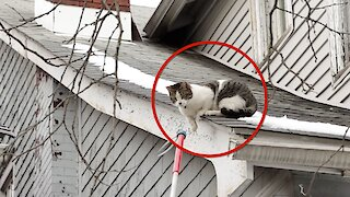 Watch: Nervous Cat Stuck On Roof Is Rescued