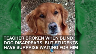 Teacher Broken When Blind Dog Disappears, But Students Have Surprise Waiting for Him - Video