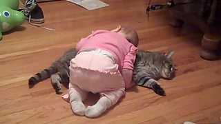 This has to be the most patient cat in the world! - Video
