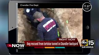 Chandler dog rescued from backyard hole - Video