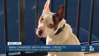 Cecil County man charged with aggravated animal cruelty