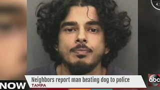 Tampa man jailed, accused of repeatedly beating dog with metal pole - Video