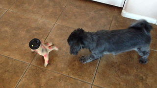 """Scared Dog Barks at Severed Hand Halloween Toy"""