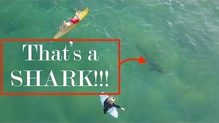 Surfers Oblivious, as Shark Lurks Below - Video