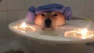 Dog takes a super relaxing bubble bath