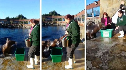Zoo teaches incredible recycling-mad sea lions to pick up litter