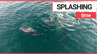 Drone footage shows pod of dolphins DANCING off the British Coast - Video