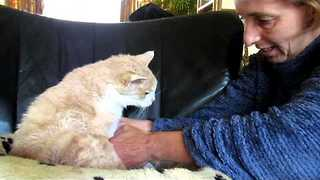 Elderly Cat Loves His Baths - Video