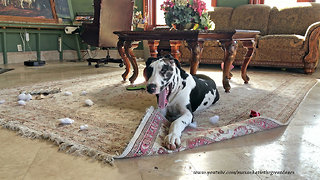 Guilty puppy gets caught chewing carpet fringe
